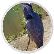 Round Beach Towel featuring the photograph Great Blue Heron by Mariola Bitner