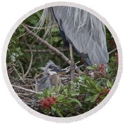 Great Blue Heron Nestling Round Beach Towel
