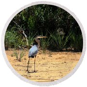 Round Beach Towel featuring the photograph Great Blue Heron On Beach by Sheila Brown