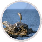 Great Blue Heron On Chesapeake Bay Round Beach Towel