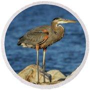 Great Blue Heron On Rock Round Beach Towel