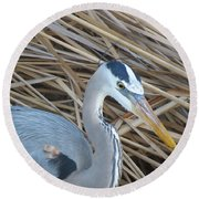 Great Blue Heron On Spi Round Beach Towel