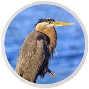 Great Blue Heron On The Chesapeake Bay Round Beach Towel