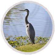 Round Beach Towel featuring the photograph Great Blue Heron by Phyllis Denton