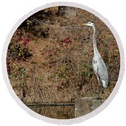 Round Beach Towel featuring the photograph Great Blue Heron Standing Tall by George Randy Bass