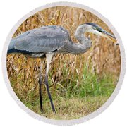Great Blue Heron Struggling With Lunch Round Beach Towel