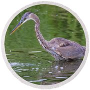 Great Blue Heron - The One That Got Away Round Beach Towel