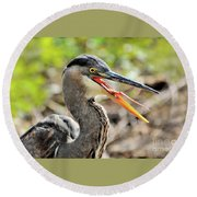 Great Blue Heron Tongue Round Beach Towel