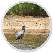 Round Beach Towel featuring the photograph Great Blue Heron Wading by Sheila Brown