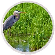 Great Blue Heron Waiting Round Beach Towel