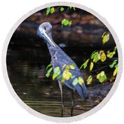 Great Blue Heron With An Itch Round Beach Towel