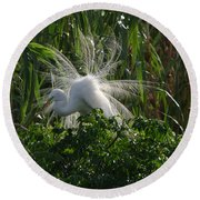 Great Egret Displays Windy Mating Plumage Round Beach Towel