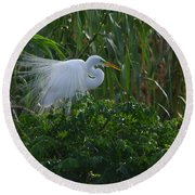 Great Egret Displays Windy Plumage Round Beach Towel