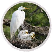 Great Egret Family  Round Beach Towel by Richard Bryce and Family