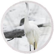 Round Beach Towel featuring the photograph Great Egret In All White  by Ricky L Jones