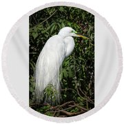 Round Beach Towel featuring the photograph Great Egret Portrait One by Steven Sparks