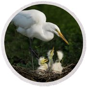 Great Egret With Chicks Round Beach Towel