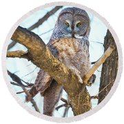 Great Gray Owl Round Beach Towel