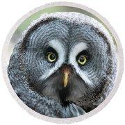 Great Grey Owl Closeup Round Beach Towel