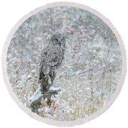 Great Grey Owl In Snow Round Beach Towel