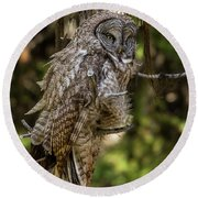 Great Grey Owl In Windy Spring Round Beach Towel by Yeates Photography