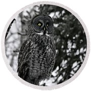 Great Grey Owl Portrait Round Beach Towel