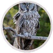 Great Grey Owl Yellowstone Round Beach Towel