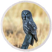 Great Grey Perching Round Beach Towel by Torbjorn Swenelius