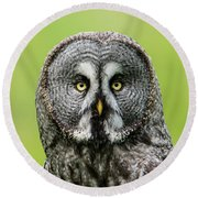 Great Grey's Portrait Closeup Square Round Beach Towel