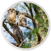 Great Horned Owl Family Round Beach Towel