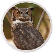 Round Beach Towel featuring the photograph Great Horned Owl In A Tree 3 by Chris Flees