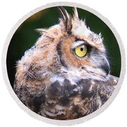 Round Beach Towel featuring the photograph Great Horned Owl Portrait by William Selander