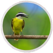 Great Kiskadee Round Beach Towel by Tony Beck