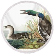 Great Norther Diver Or Loon Round Beach Towel