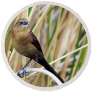 Great-tailed Grackle Round Beach Towel by Afrodita Ellerman