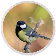 Great Tit - Parus Major Round Beach Towel