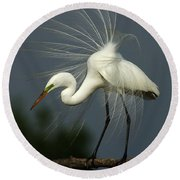Majestic Great White Egret High Island Texas Round Beach Towel by Bob Christopher