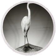 Great White Egret On Hippo Round Beach Towel
