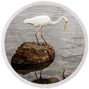 Great White Heron Round Beach Towel by Elena Elisseeva