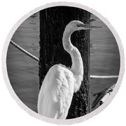 Great White Heron In Black And White Round Beach Towel by Garry Gay