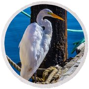 Great White Heron On Boat Dock Round Beach Towel by Garry Gay