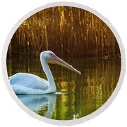 Great White Pelican Swimming On Lake Round Beach Towel