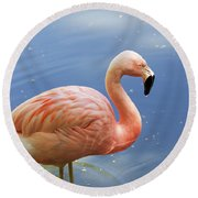 Greater Flamingo Round Beach Towel by Afrodita Ellerman