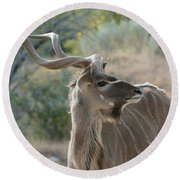 Round Beach Towel featuring the photograph Greater Kudu 4 by Fraida Gutovich
