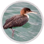 Round Beach Towel featuring the photograph Grebe In The Water by AJ Schibig