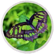 Green And Black Butterfly Round Beach Towel