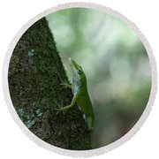 Green Anole Round Beach Towel by Christopher L Thomley