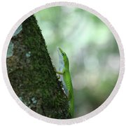 Green Anole Climbing Round Beach Towel by Christopher L Thomley