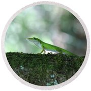 Green Anole Posing Round Beach Towel