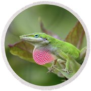 Green Anole Round Beach Towel by Terri Mills